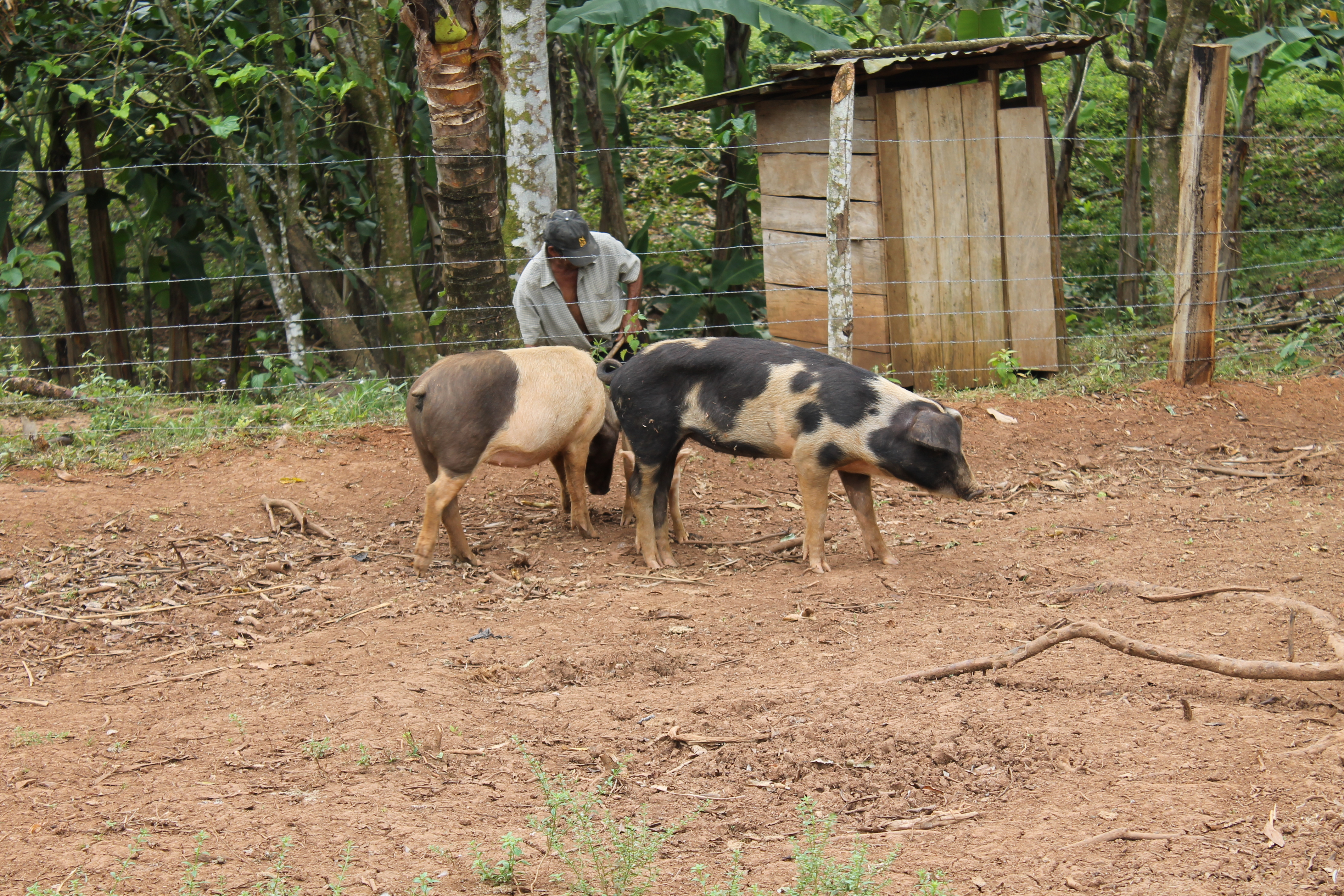 animal husbandry 1 Get information of top companies dealing in animal husbandry supplies, livestock care equipment and contact verified animal husbandry equipment manufacturers, animal.
